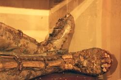 Relikvija Svetog Eugena u Futogu